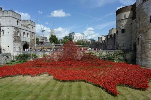 Poppies-at-Tower-of-London